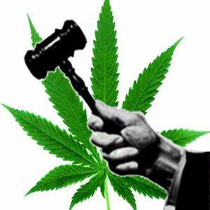 Image result for marijuana legalize